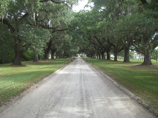Mount Pleasant, SC: Oak Tree Entrance