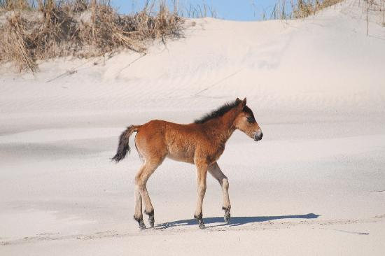 Wild Horse Adventure Tours: tiny dancer