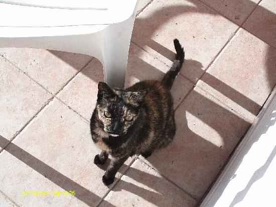 Caybeach Princess: Cat at the Resort