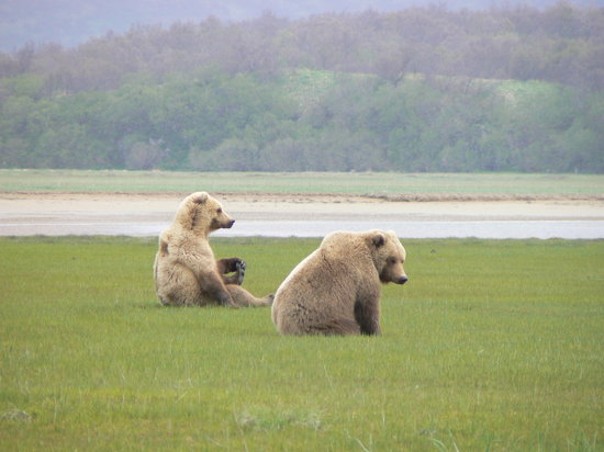 Bald Mountain Air Service: Mum and Cub