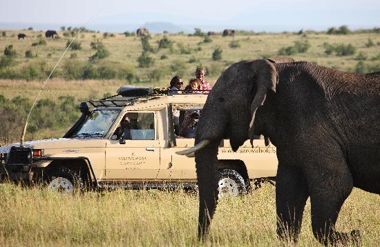 Sarova Mara Game Camp: Sarova Mara Game Drives
