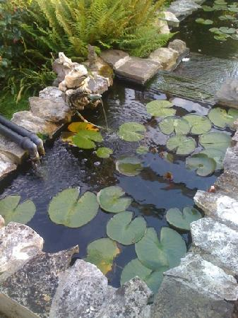 Woodstock Guest House: the pond in the garden