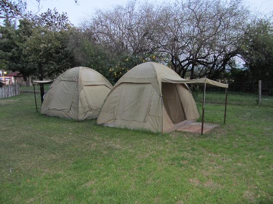 Magnolia Guesthouse: Also comportable tents with beds for backpackers