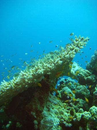 Faraana Reef Resort : under water
