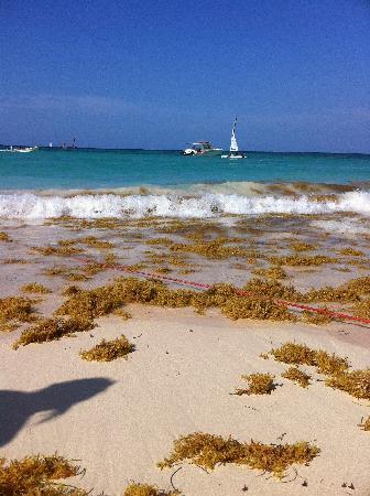 Grand Bahia Principe Punta Cana: les algues...