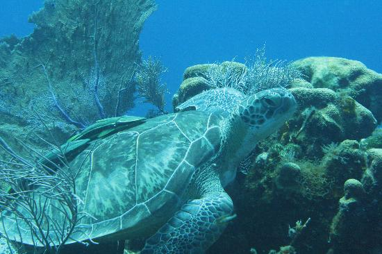 Tranquilseas Eco Lodge and Dive Center: Roatan marine park