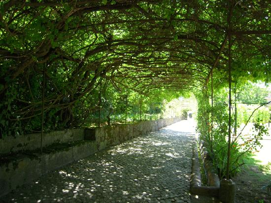 Inside Lisbon : Vines growing over the walkway to the Barrel Rooms.