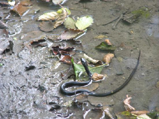 Yedigoller National Park: An Asiatic Water Snake in the lake
