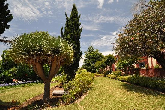 Around Main House, Quinta das Vinhas, June/July 2011