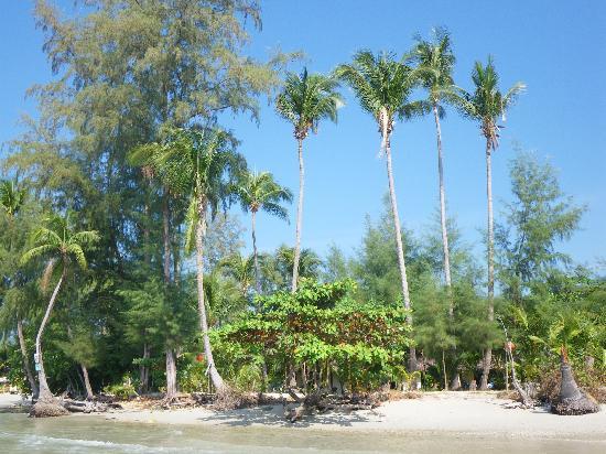 บลูลากูน: The beach a stones throw away