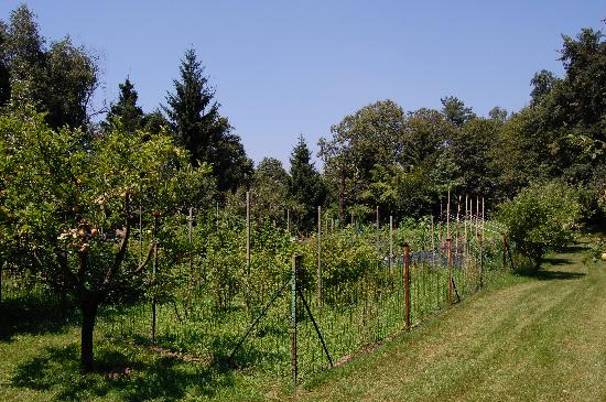 Drezzo, Italia: the wonderful vegetable garden behind the house