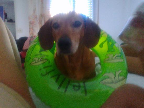 Hotel Piper: vacanza per cani