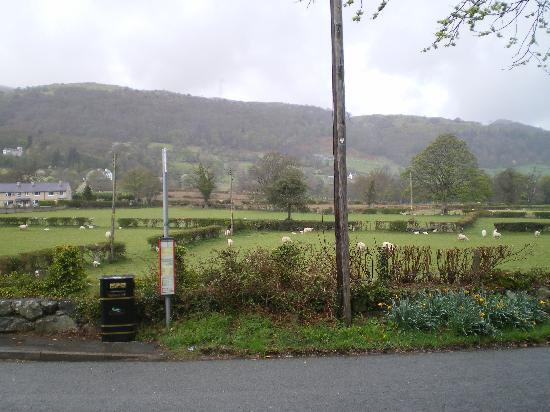 Tir y Coed Country House : View from the northbound bus stop in Rowen
