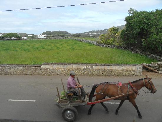 Quinta dos Frutos: Peak hour from my so cute little cottage