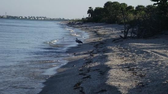 Boca Grande, FL: View of Beach