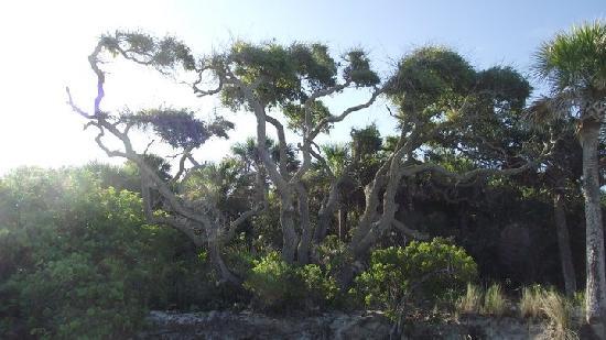 Cayo Costa State Park: scenery