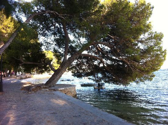 Hotel Illa d'Or: Pine walk