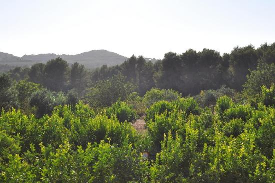 Agroturismo Can Gall: View from the big breakfast/dinner table