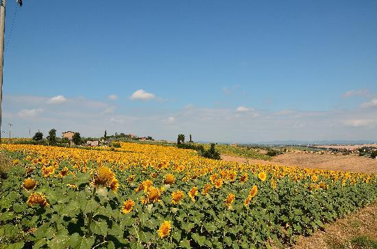 Agriturismo Pratovalle: Zicht achterzijde