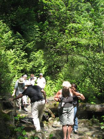 Shoreline Tours and Charters : Short walk to Rainbow Falls
