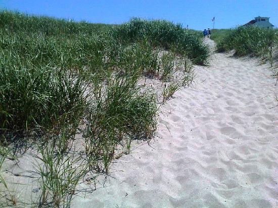 Race Point Beach area