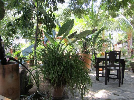Villa Mozart y Macondo: the garden where you have breakfast
