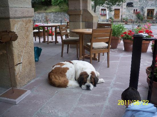 Hotel del Oso: One of the dogs