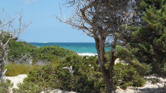 Chiringay : Pinien und Strand