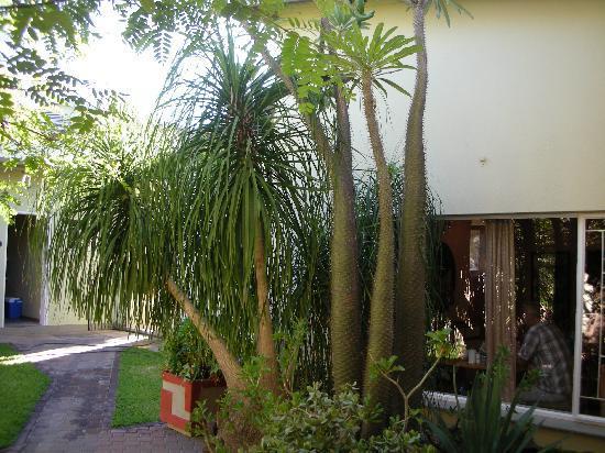Hotel Pension Moni : Salle pt déjeuner vue du jardin