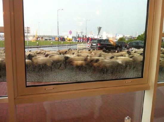 Hotel Fährhaus: Blick aus dem Restaurantfenster
