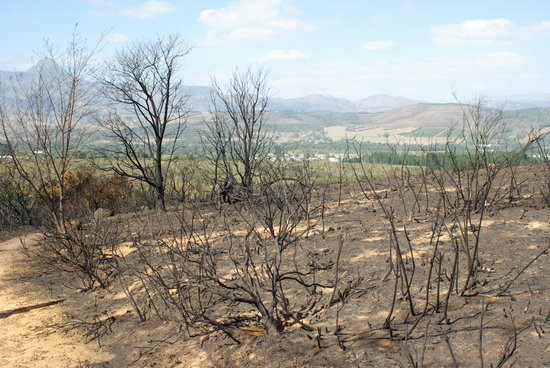 Helderberg Nature Reserve : The results of the fire