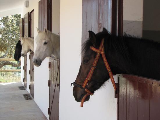 Horta da Moura - Hotel Rural: Horses