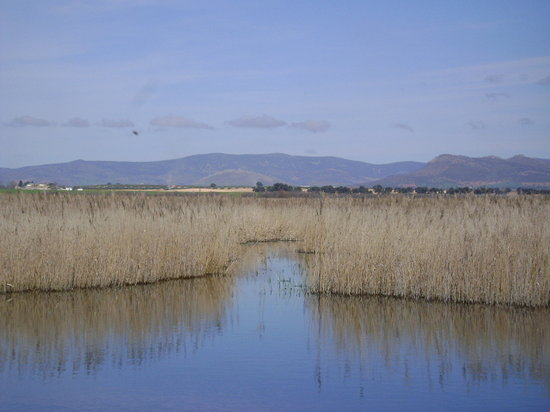 ‪Tablas de Daimiel National Park‬