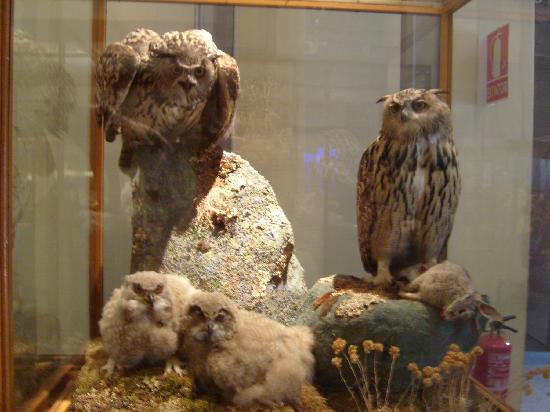 Museo Nacional de Ciencias Naturales: il GUFO!!!!!Foto dedicata a trip advisor!