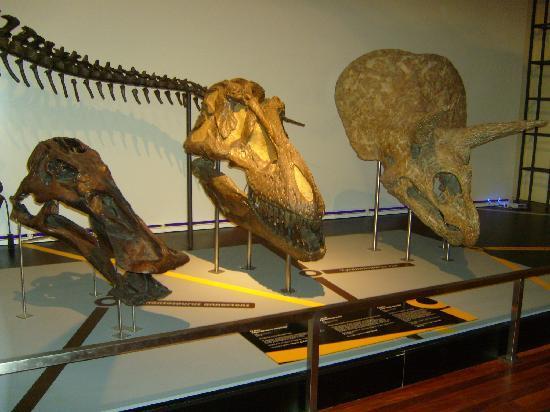 Museo Nacional de Ciencias Naturales: teste dinosauri!