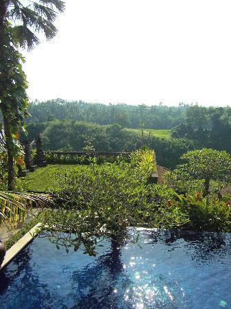 أنهيرا سويت أوبد: vistas a la selva desde la piscina