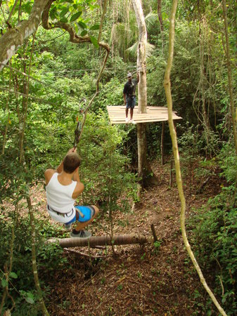 Jungle Top Zipline
