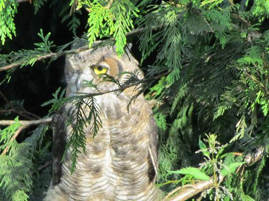 Millstone Manor Bed, Breakfast & Vacation Rental: one of the lovely owls in the area