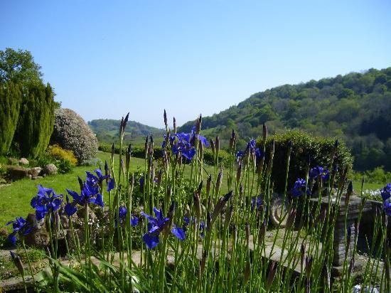 Eastwrey Barton: Garden view