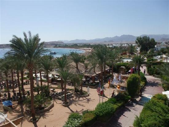 Oonas Dive Club Hotel: Roof top bar view across Naama Bay