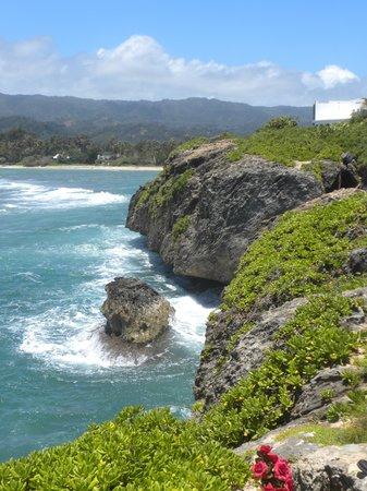 写真Discover Hawaii Tours枚