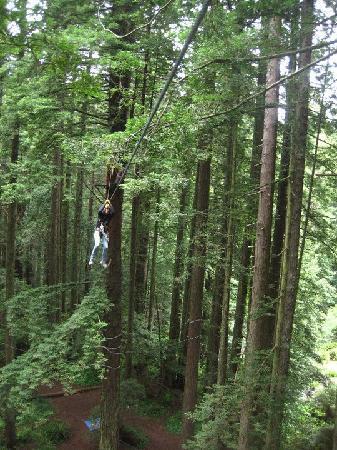 North Coast Adventure Centers : zip lining through the canopy