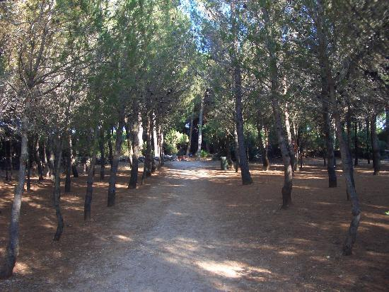 Club Hotel Torre Moresca: the path through the pine forest to the beach