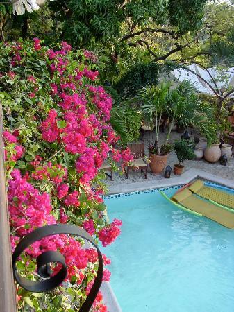 The Inn at Villa Bambou : Lush!