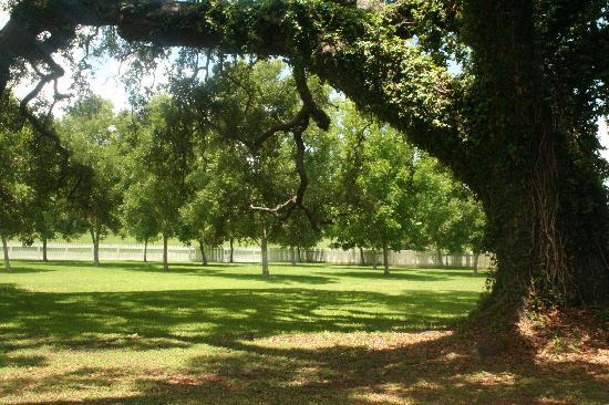Laura Plantation: Louisiana's Creole Heritage Site: Front Yard looking out to levee or Mississippi River
