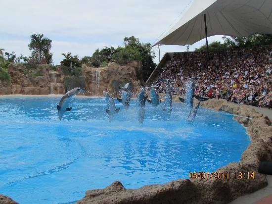 Paradise Park Fun Lifestyle Hotel: must see loro parque