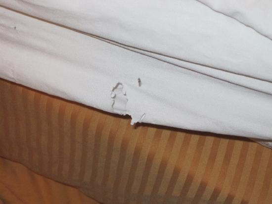 Comfort Inn Westport: Holy sheets