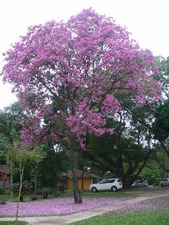 Quinta de Ykua Sati: outside