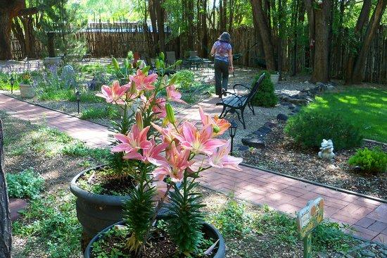 Dreamcatcher Bed & Breakfast: Garden, looking at Patio