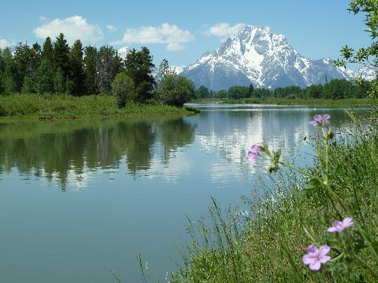 Oxbow Bend: Wildflowers on the river bank.